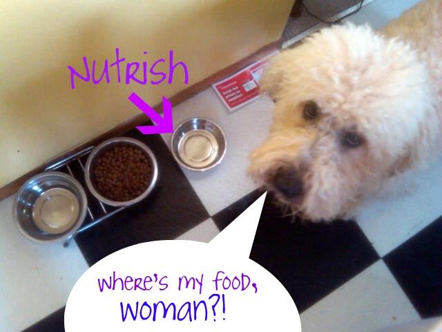 bfood Review: Nutrish dog food